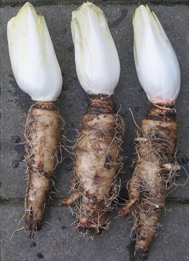 inulina - naturalne słodziki