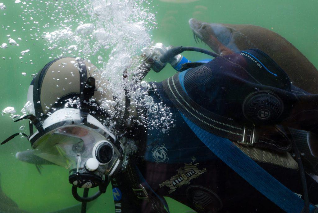 nurkowanie z delfinem
